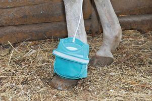 magnetoterapia en caballos