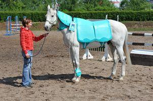 tratamiento con imanes en caballos