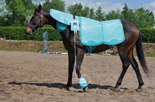 magnetoterapia dolor pata caballos